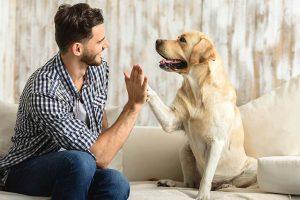 پاک کردن گوش سگ و نکات مربوط به آن
