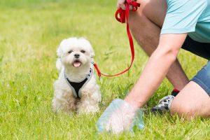 مدفوع سگ و هر آنچه درباره آن باید بدانید!
