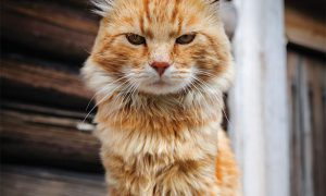 غذای گربه ی مسن و خواص آن